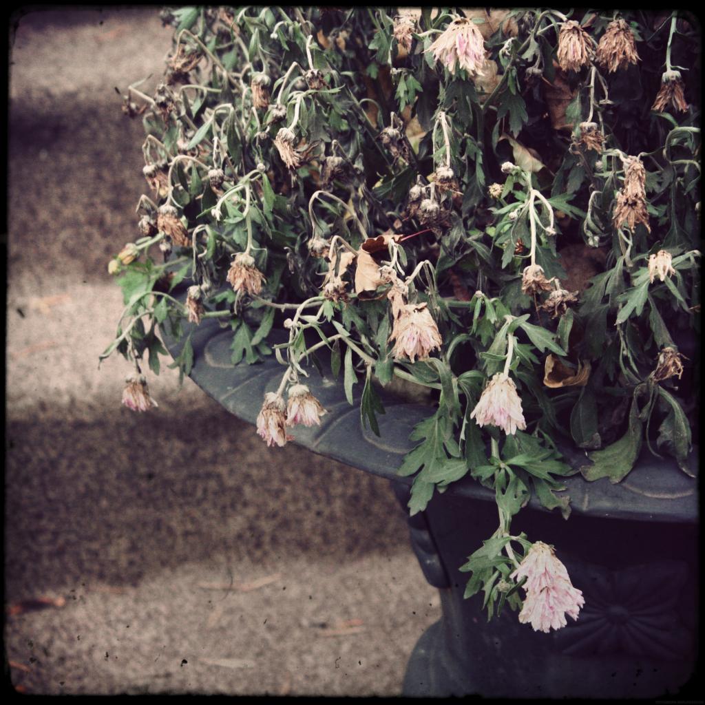 fleursgelees_effected