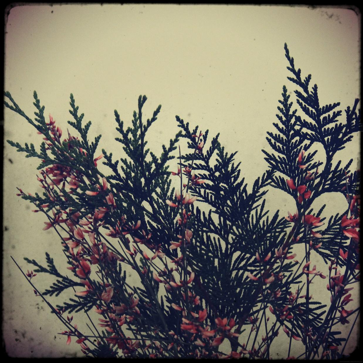 fleurs1er_effected