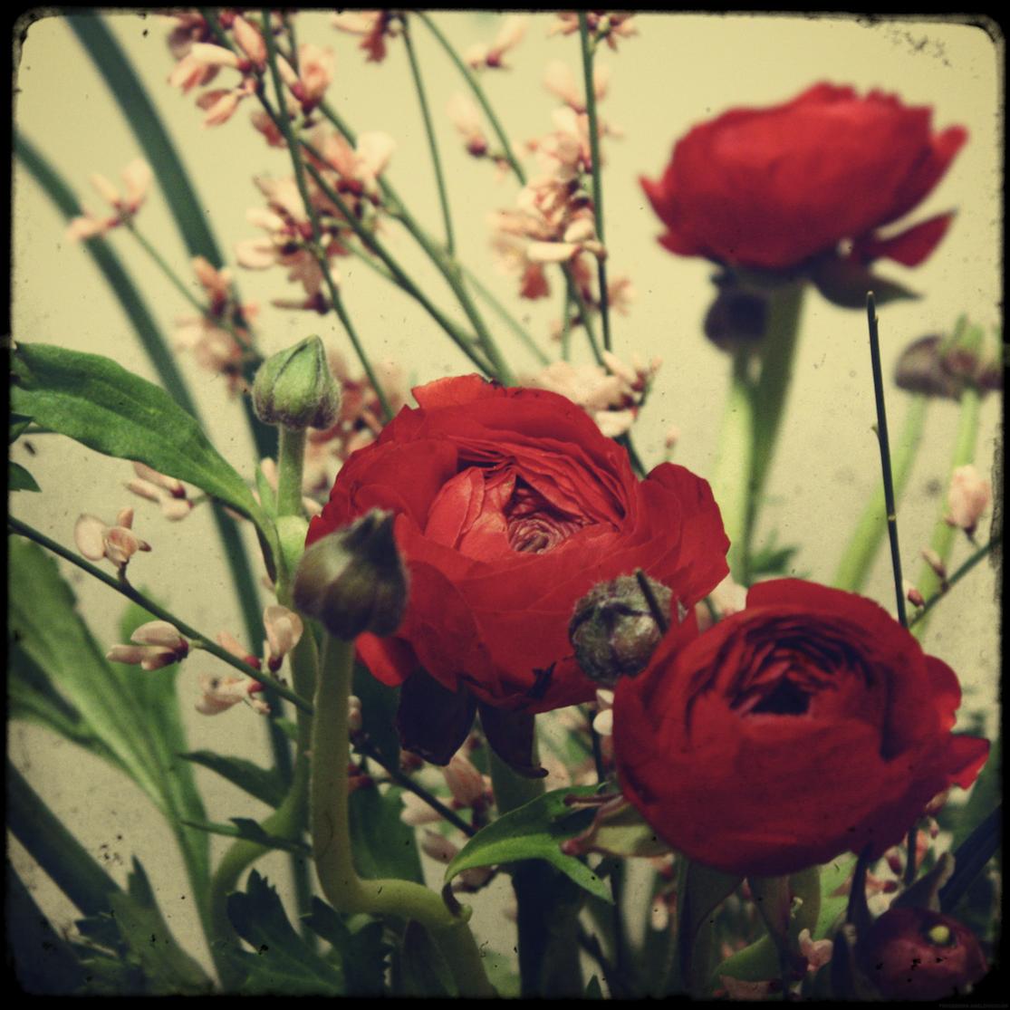fleursfevrier_effected