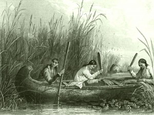 RA06_14_Wild_rice_harvesting_19th_century