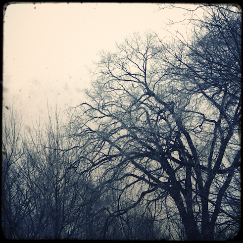arbresboiscou_effected.png