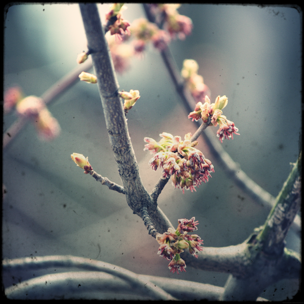 bourgeons2_effected.png