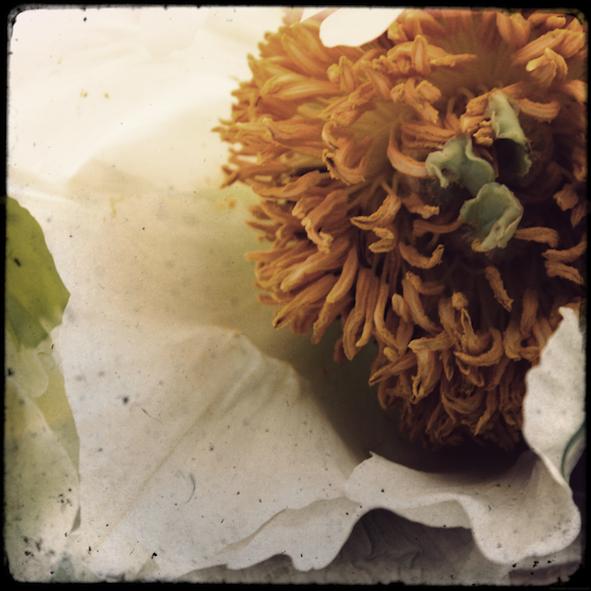 fleurs2MAB_effected.png