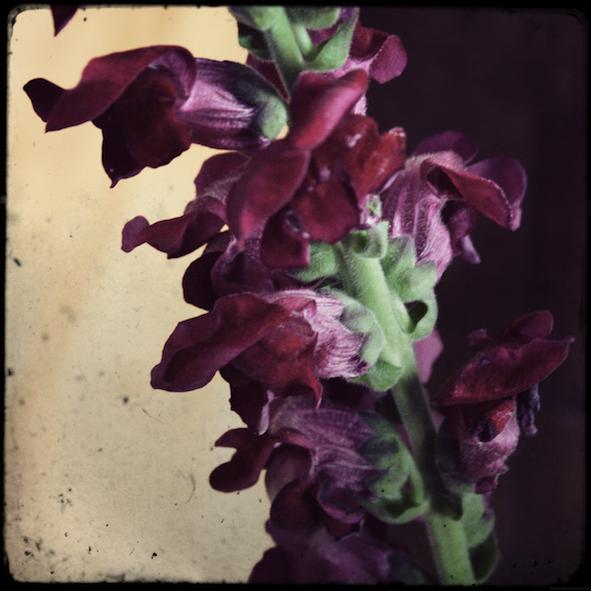 fleursfete2_effected.png