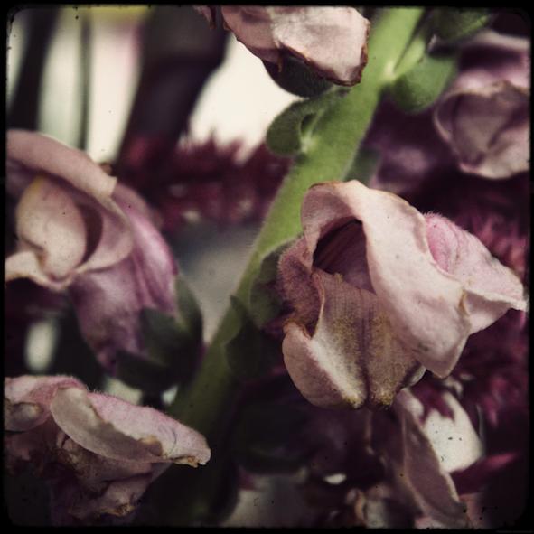 fleursfete4_effected.png