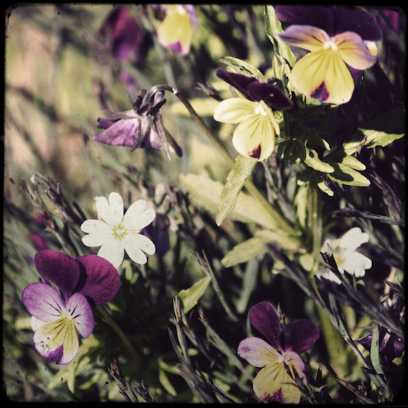 fleursparterre2_effected.png