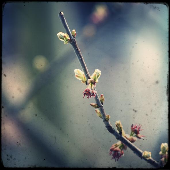 printemps_effected.png